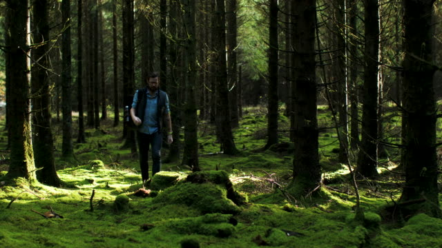 a man walking in the forest - rucksack stock videos & royalty-free footage