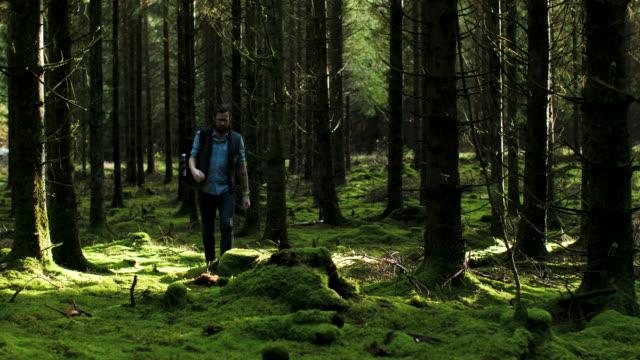 en man som går i skogen - ryggsäck bildbanksvideor och videomaterial från bakom kulisserna
