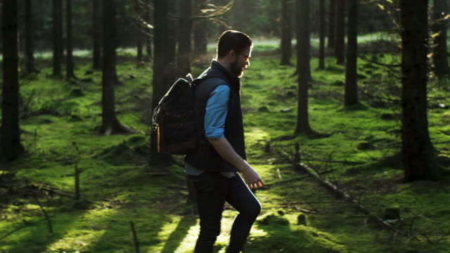 a man walking in the forest - dolly shot stock videos & royalty-free footage