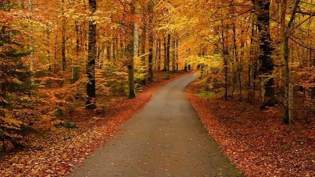 a narrow road through beech forest in autumn - 硬木の木点の映像素材/bロール