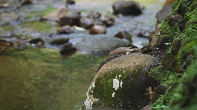 a rock in front of a river bank - moss stock videos & royalty-free footage