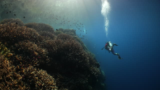 a scuba diver swimming along a shallow coral reef while sun rays beam through the water - underwater diving stock videos & royalty-free footage