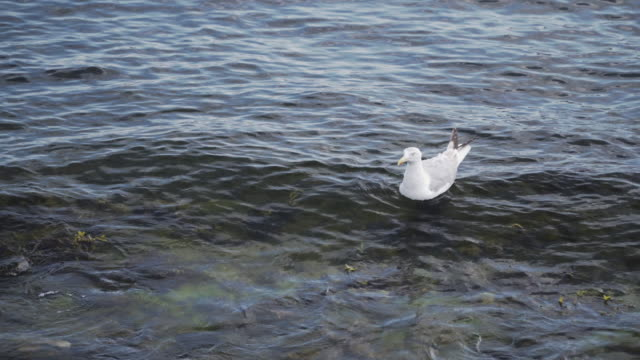 a seagull in copenhagen city, denmark - seagull stock videos & royalty-free footage