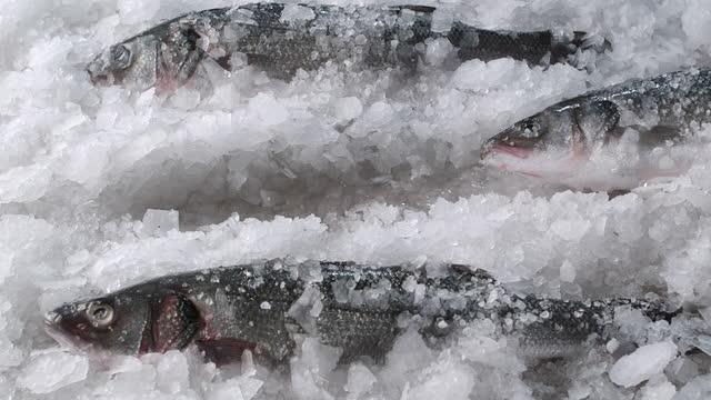 ein ausgewählter fisch, der wegrutscht - fisch stock-videos und b-roll-filmmaterial