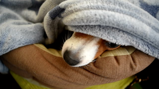 a sleeping dog - bed sheets stock videos & royalty-free footage