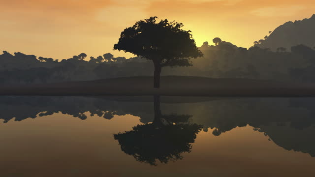 a tree on a lake - scenics nature stock videos & royalty-free footage