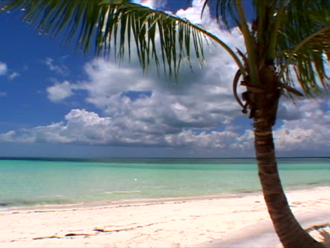 abaco: palm on treasure cay beach - fan palm tree stock videos & royalty-free footage