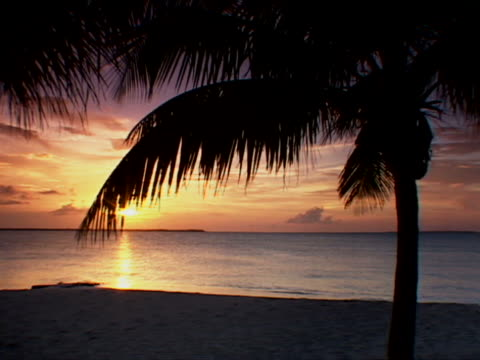 abaco:  sunset and palm tree on treasure cay beach - fan palm tree stock videos & royalty-free footage