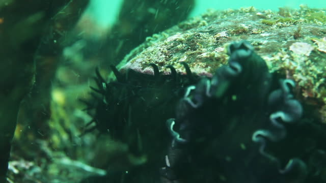 Abalone on seafloor, extreme close up
