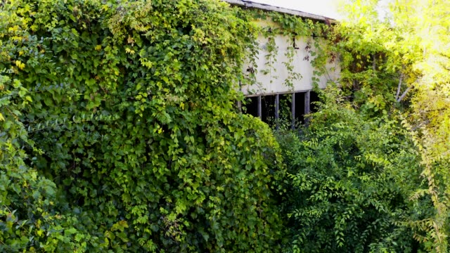 vídeos de stock, filmes e b-roll de abandonou o edifício overgrown com hera selvagem - trepadeira