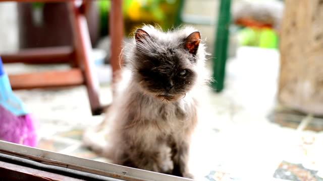 abbandonato di gatto - abbandonato video stock e b–roll