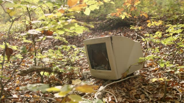 MS Abandoned computer polluting sunny autumn woods