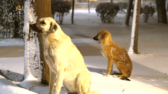Abandoned dogs on freezing cold in snow covered public park