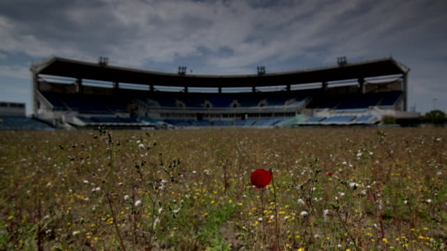 vídeos de stock, filmes e b-roll de abandoned olympic hellinikon baseball centre tall grass wild flowers fg soft focus empty grandstand bg - soft focus