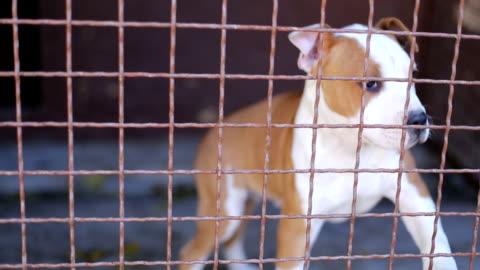 vídeos y material grabado en eventos de stock de abandonado cachorro - separación