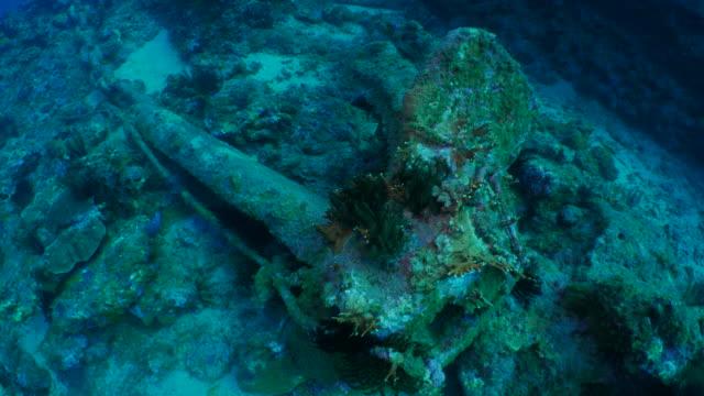 vídeos de stock e filmes b-roll de abandoned ship's anchor damaged undersea coral reef - ancora