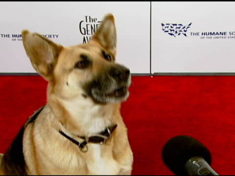 Abbey the German Shepherd on the event and working with Will Smith on 'I Am Legend' at the 2008 Genesis Awards at the Beverly Hilton in Beverly Hills...