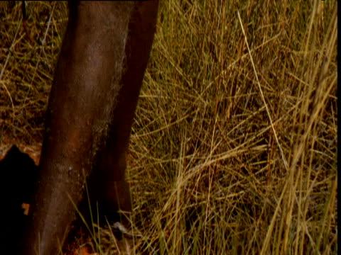 vídeos y material grabado en eventos de stock de aboriginal man sets fire to grassland in outback, northern territory, australia - cultura aborigen australiana