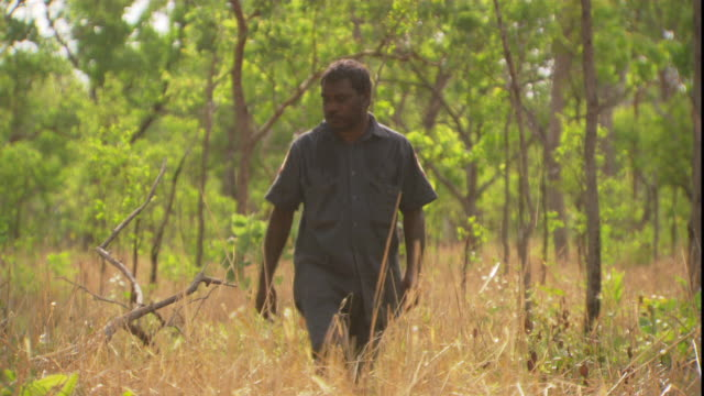 a aboriginal official perspires as he examines dry grass in a wooded outback area. - aboriginal australian ethnicity stock videos & royalty-free footage