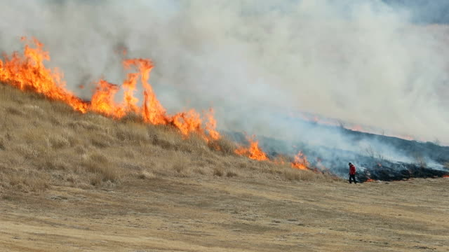 About 100 volunteers gathered at the edge of the hilly Kusasenrigahama field in Aso Kumamoto Prefecture to set fire to about 30 hectares of dried...