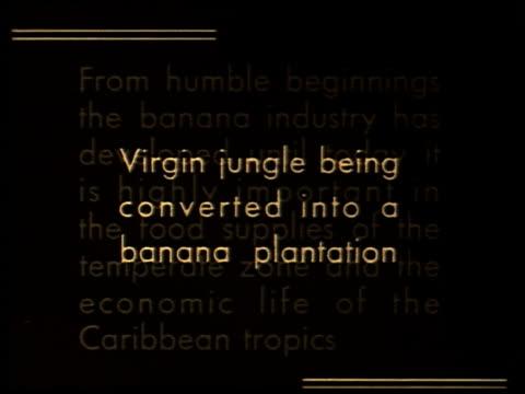 about bananas - 4 of 15 - この撮影のクリップをもっと見る 2074点の映像素材/bロール
