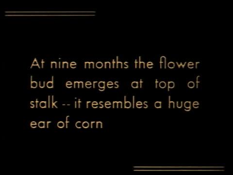about bananas - 6 of 15 - この撮影のクリップをもっと見る 2074点の映像素材/bロール