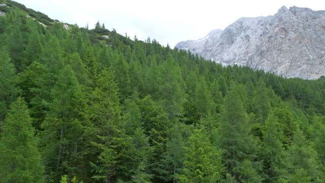 aerial above the fir tree forest ion the mountains - evergreen stock videos & royalty-free footage
