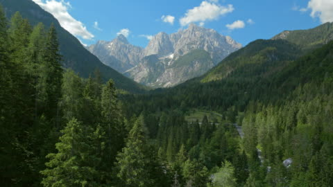 aerial above the forest trees towards the mountains - aerial view stock videos & royalty-free footage