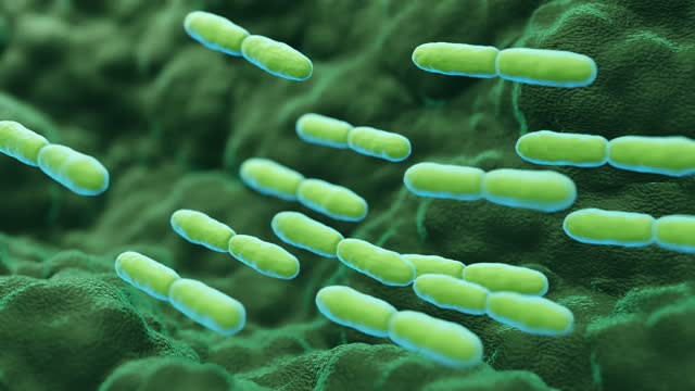 腹筋乳酸菌ブルガリカス菌 - 空腸点の映像素材/bロール