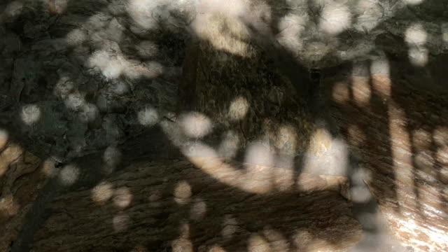 vídeos de stock, filmes e b-roll de silhueta de abstrato de palmeira no chão - estampa de folha