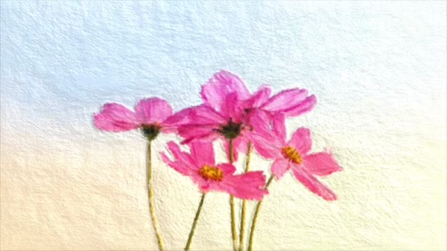 vídeos de stock e filmes b-roll de abstract backgrounds , bouquet of pink cosmos , oil painting style - pétala