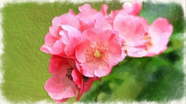 abstract backgrounds , bouquet of tiny pink roses , water color painting style - bouquet video stock e b–roll