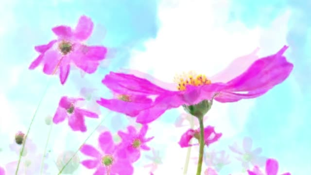 vídeos de stock e filmes b-roll de abstract backgrounds , pink cosmos meadow , watercolor painting style - pétala