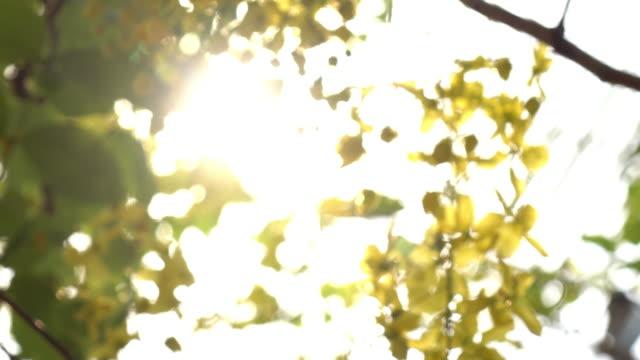 abstrakt blur scen gul blomma i morgon