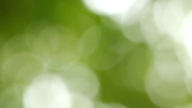 abstract bokeh tree green with sun flare