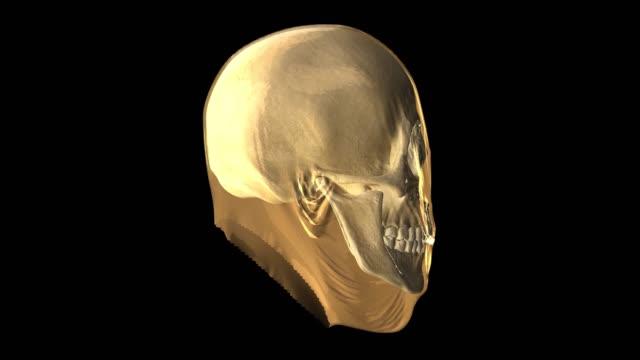 vídeos de stock, filmes e b-roll de ilustração digital abstrata da renderização 3d de um busto de cabeça colorido com o rosto fora mostrando crânio dentro. - telencéfalo
