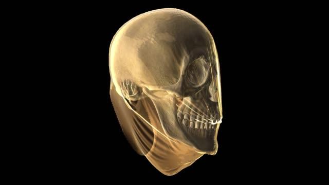 ●中に頭蓋骨を見せる顔をしたカラフルなヘッドバストの3dレンダリングから抽象的なデジタルイラスト。 - cerebellum点の映像素材/bロール