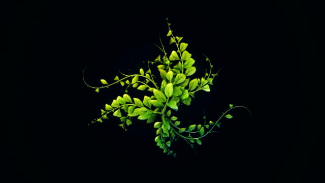 abstract digitaly plant growth background - leaf stock videos & royalty-free footage