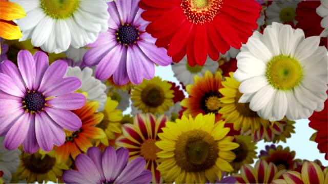 抽象的な花の背景 - 花束点の映像素材/bロール