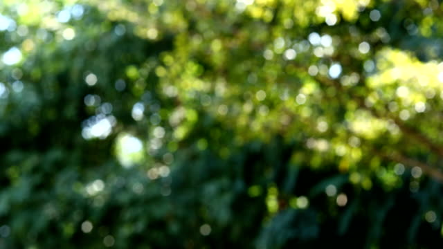 Abstracte groene bladeren bokeh natuur