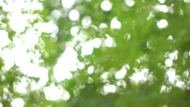 Abstract green nature scene background