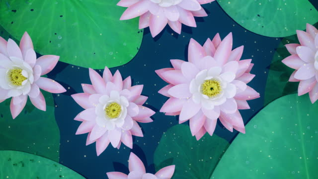 abstract lotus background - mandala stock videos & royalty-free footage