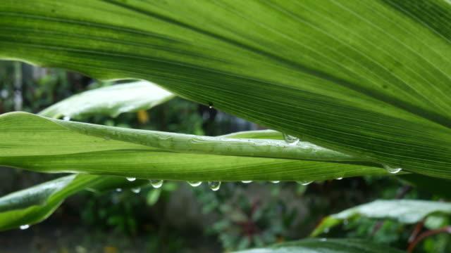 vídeos de stock, filmes e b-roll de gota de água e fundo abstrato exuberante folhagem - estampa de folha