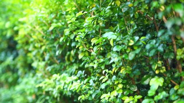 抽象的な緑豊かな葉の背景 - 豊富点の映像素材/bロール