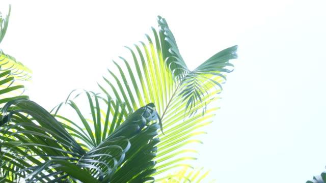 vídeos de stock, filmes e b-roll de fundo abstrato exuberante folhagem - estampa de folha
