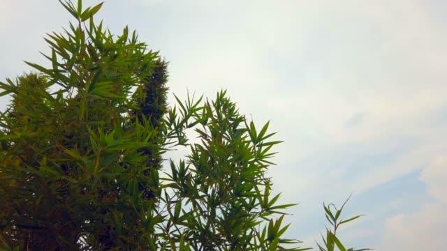 vidéos et rushes de le feuillage luxuriant abstrait sur le fond de ciel, vidéo de stock de bambou - bamboo plant