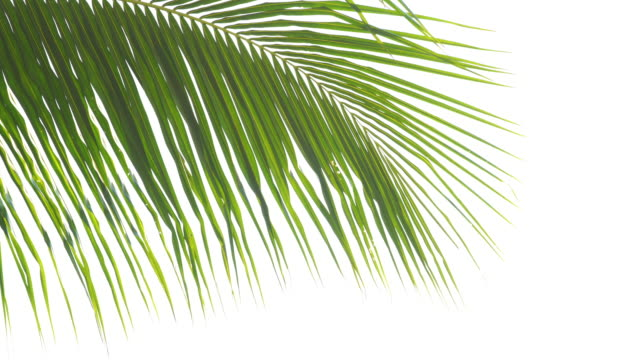 abstract lush foliage on white background - branch stock videos & royalty-free footage