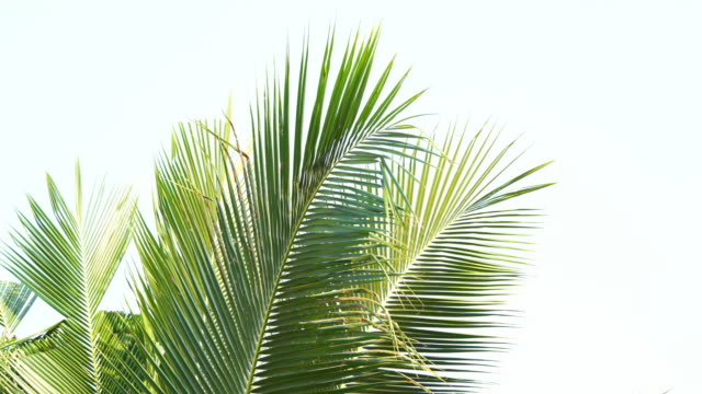 abstract lush foliage on white background - idyllic stock videos & royalty-free footage