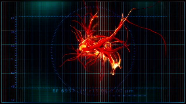 abstract nerve cell - cell structure stock videos & royalty-free footage