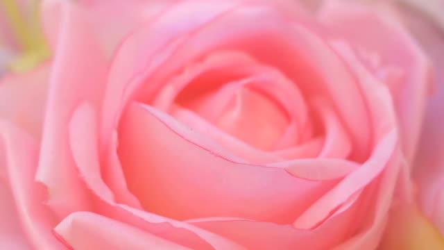 Sammanfattning av rosa ros